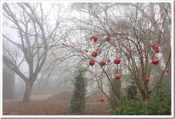 111220_fog_pomegranates