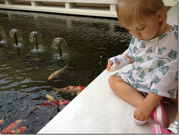 CHOMP Fish Pond
