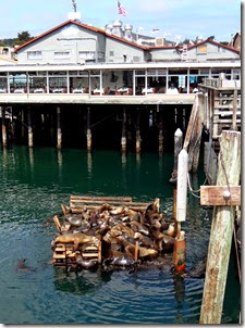 Monterey Bay dock & bike ride 007