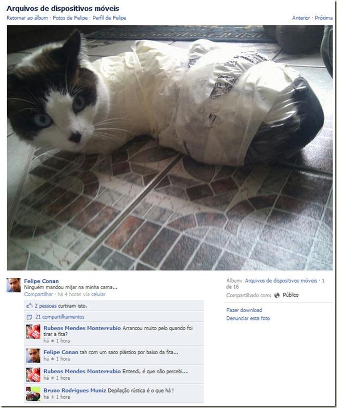 gato_torturado