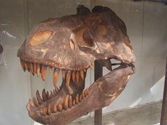 2008.09.10-003 crâne de tyrannosaure