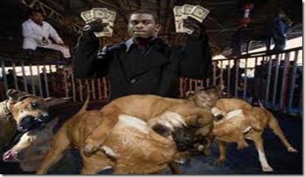 michael vick & dogs