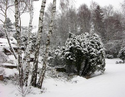 1 snö