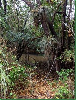 Mrazek Pond & Snake Bight Trail 040