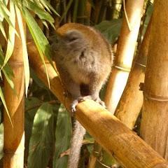 Lemurs Park::IMGP4479