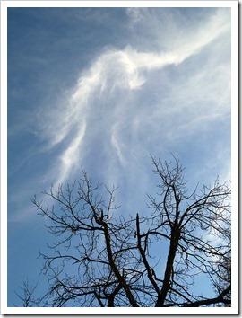 111231_tree_silhouette_17