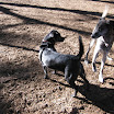 DogPark-20.jpg