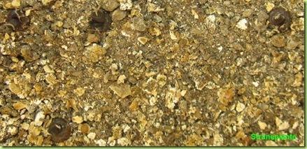 Ariocarpus furfuraceus Matehuala - SLP-2011-07-09_00007IMG_4574