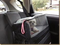Car Seat-007