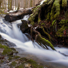 by Siniša Almaši - Nature Up Close Water ( water, stream, wood, roots, croatia, forest, dslr, winter, nature, tree, cold, color, shadow, view, light, river )