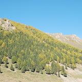 Tianshan - Versant sud boisé bicolore