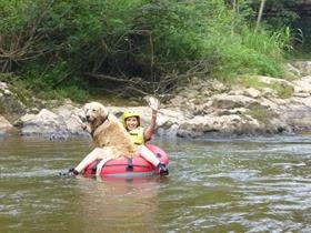 Pets adventure 16 (225)