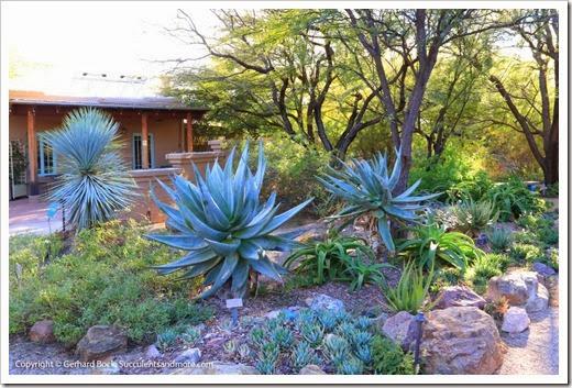 131203_TucsonBotanicalGarden_139