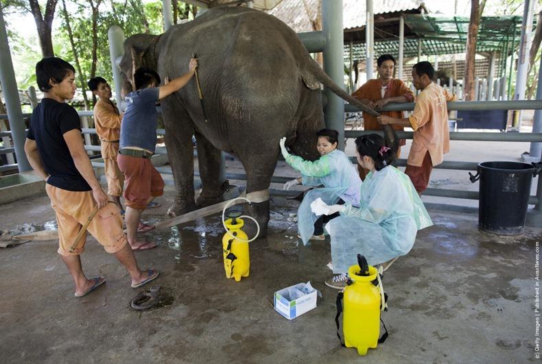 elephant-hospital-6