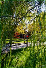 House through the Weeping Willow