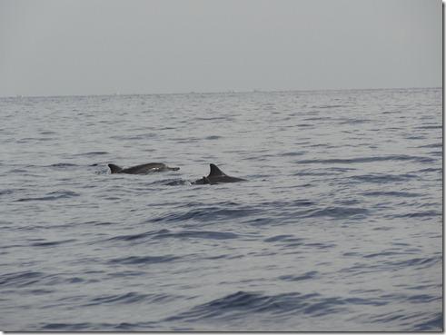 12 11 Bali (1094)  Lovina Dolphins