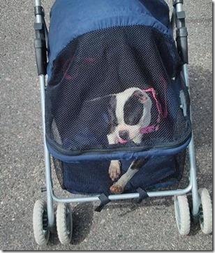 mazy stroller