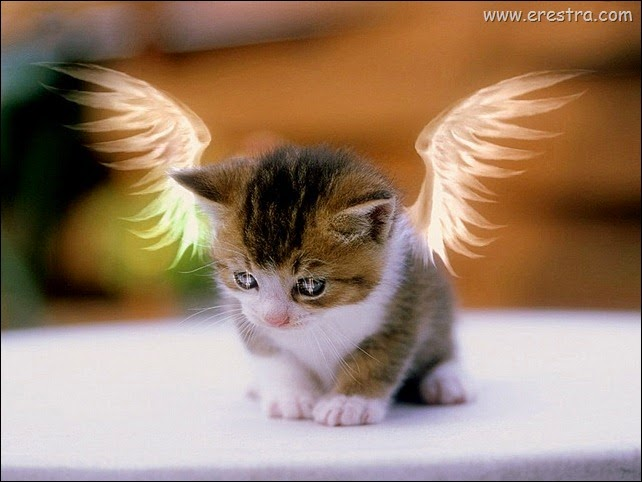 Angel_Kitty