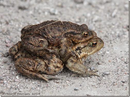 107-toads