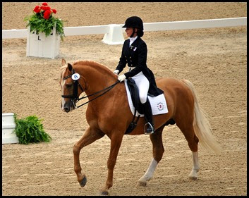 08a2 - Dressage Arena - beautiful horse and rider