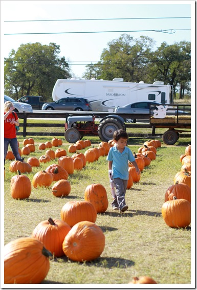 pumpkin patch IMG_9924