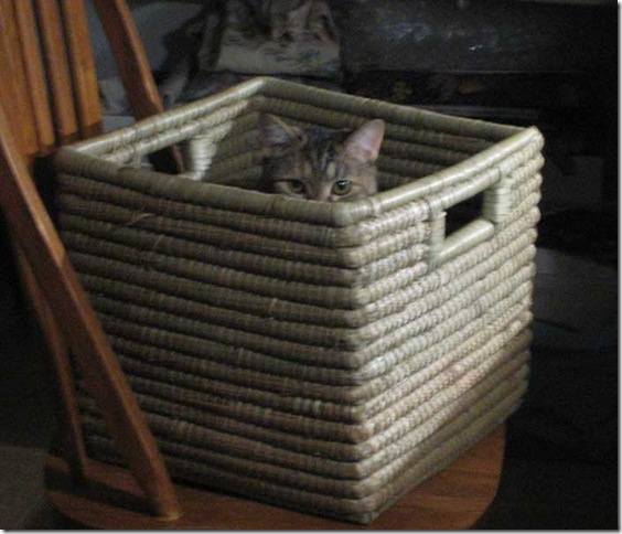kitty-in-the-box-1497