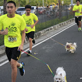 Pet Express Doggie Run 2012 Philippines. Jpg (62).JPG