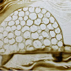 Квеквескири Кристина 8.jpg