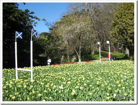 Rugby pitch in flowers with the flags of Scotland and Argentina at the Botanical Gardens.
