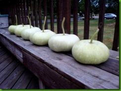 Bhoomi Gourd