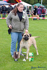 20100513-Bullmastiff-Clubmatch_31113.jpg