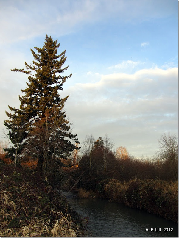 Johnson Creek.  Photo of the day, February 3, 2012.  Gresham, Oregon.  January 7, 2012.