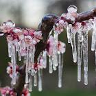 Tavaszi fagyok jönnek!