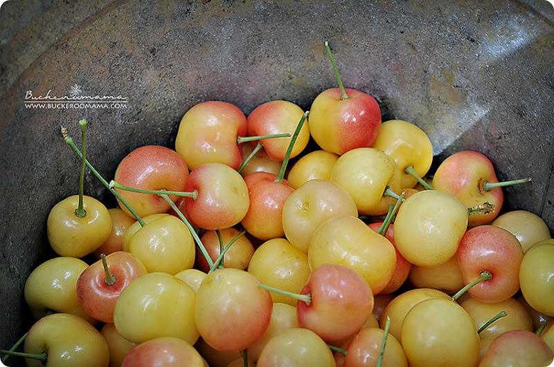 Rainier-cherries-(1)