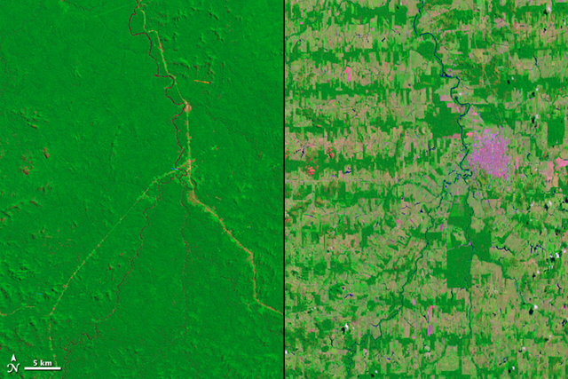 Deforestation in the Amazon Rainforest takes on many different patterns. In Rondônia, a state in Western Brazil, deforestation took on the fishbone pattern revealed in these Landsat images from 1975 and 2012. NASA images courtesy Landsat team