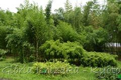 Glória Ishizaka -   Kyoto Botanical Garden 2012 - 93