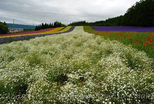 Glória Ishizaka - Farm Tomita 61