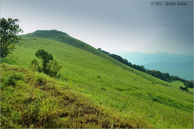Kodachadri Grass lands