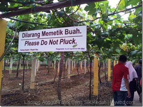 Ladang Anggur Tasik Beris 3