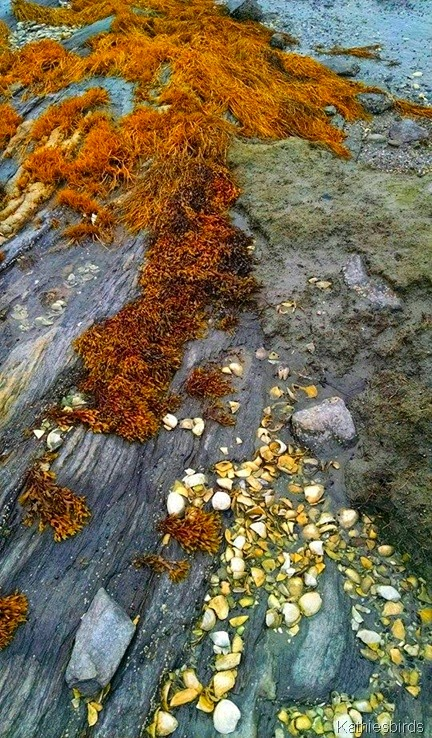12. seashells and seaweed 9-6-14