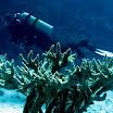 koral losie rogi.jpg