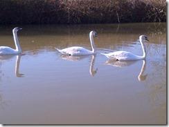 Wiltshire-20130430-00517