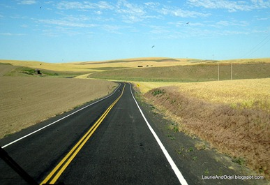 Scene of the Palouse in summer