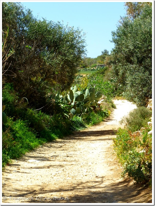 Salib tal-Gholja, Delimara, Marsaxlokk (96)