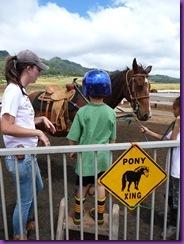 horse rescue 034