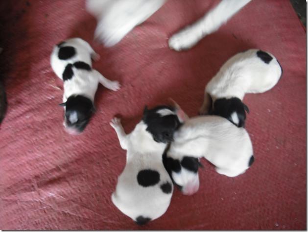 fotos de perritos imagenesifotos.blogspot (9)