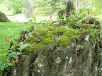 Many of the rocks support a miniature garden like this.