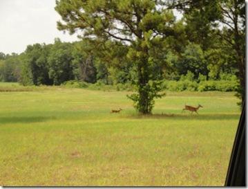 4.  Deer