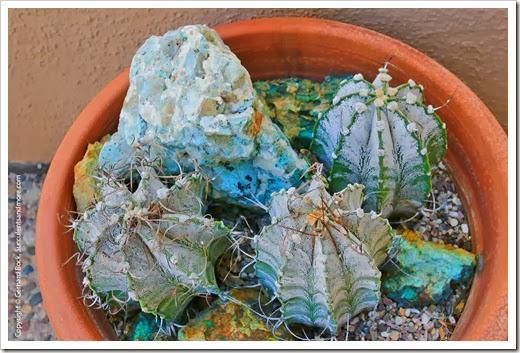 131203_TucsonBotanicalGarden_053