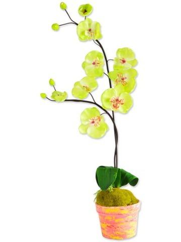 arranjo-de-flores-orquideas-vaso-1928
